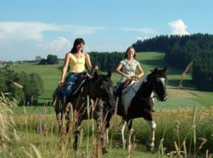 Horse Riding At Vitosha Mountain