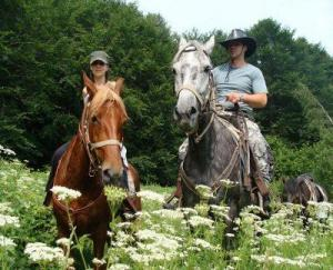 Horse Riding Tour At Vitosha Mountain Packages
